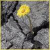 flower-versus-asphalt
