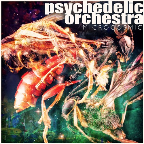Psychedelic Orchestra - Bittersweet (clip)
