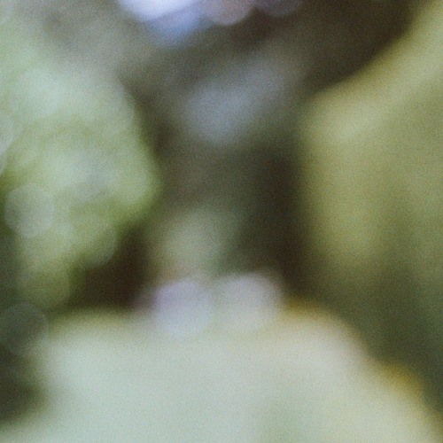 into the spring (live recording) - Sandro Manzon