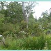 Interview with Alan Lane - Popes Glen Bushcare Group, Blue Mountains