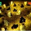 Tere Ishq Nachaya - Supreme Ishq - Riaz Ali Qadri
