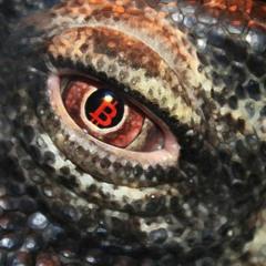 ₿ Na - Komodo Dragon - Featuring Andreas Antonopoulos