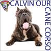 Calvin Our Cane Corso Ditty