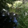 Loop : Across the stream