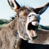 Donkey Song
