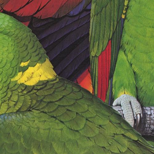 Birds Of A Feather - Mixtape