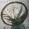 Ada Virus Zika, Revisi UU Wabah Tak Perlu Dikebut mp3