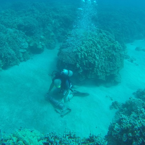 Reeling In the Coral Reef Soundscape