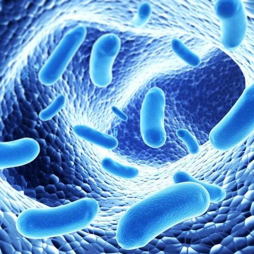 Streptococcus Revealed