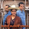 Where'm gonna live Cover version by Band Orange Blossom Special