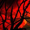 Sayko - Red Rain feat. Clara (free download)
