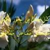 Macam-Macam Syiir Lagu Bahasa Arab (Ilmu Arudl)