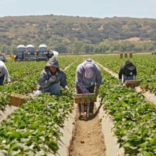 Labor Violations Remain Common in Farmwork