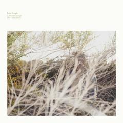 Luke Temple - The Birds of Late December