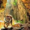 DANgal Tiger