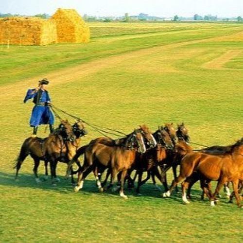 Attila et les Cavaliers de la Steppe Hongroise