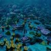 iv - Sea of Eternity