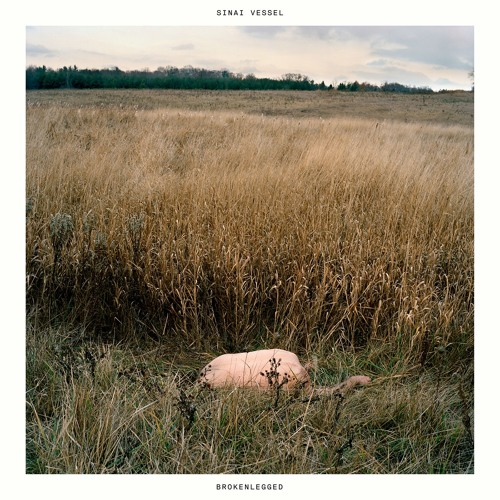 Sinai Vessel - Brokenlegged