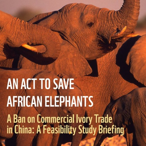 Episode 79 - Will there be a ban on China's commercial ivory trade?