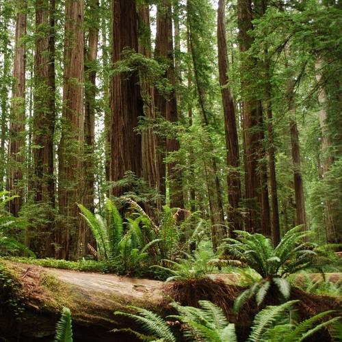 EPIC Presents at 2016 Coast Redwood Forest Symposium