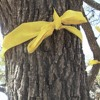 Tie A Yellow Ribbon Ironic version