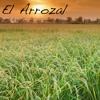 El Arrozal