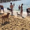 El Moviment Diagonal Mar fa un balanç negatiu de la platja de gossos