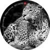 Boriqua Tribez - Splash (Tom Hades Remix)