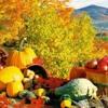 Fall favorites list_tease