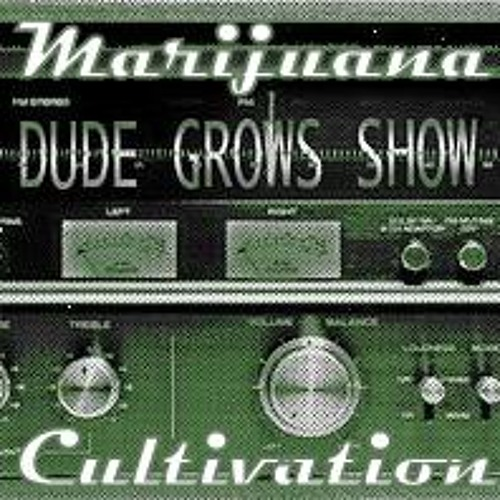 The Dude Grows Show - Dude Grows Show 300 Growing Marijuana Whats Growing On