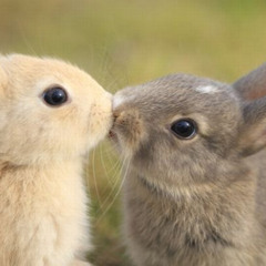 GoldenNecklace - Happy Rabbit
