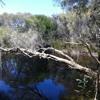 Chelodina Wetland, Murdoch University, Perth, Western Australia #OHEH2016students