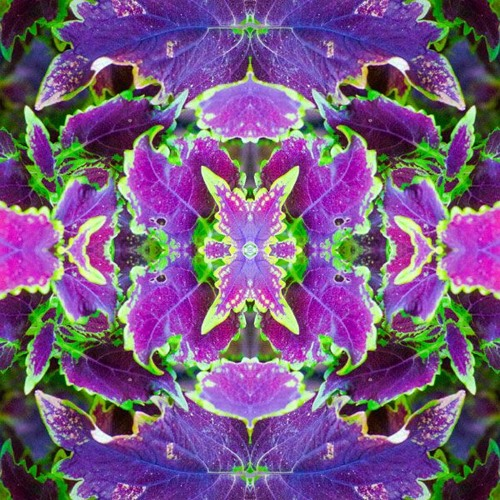 ELeCTRiCK JiM. - Flower of Light