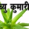 घ्यु कुमारी को स्वास्थ्य लाभहरु - (Health Benefits of Aloe Vera)
