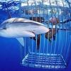 Richard Calland speaks to shark attack survivor Craig