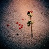 The Dance of the Dispossessed - Dead Roses