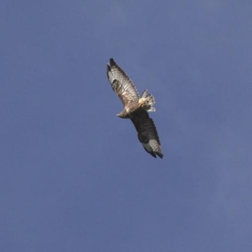 Nature walk with Alex Sally. Wild buzzards.