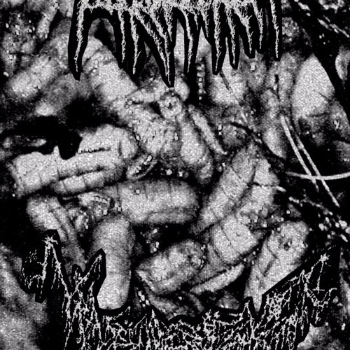 Black Wilderness - Translucent Shadows Of The Devil Within-My Predatory Infatuation  Will Never Rest
