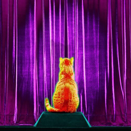 kurz erklärt: Katze Ivanka