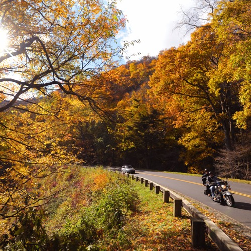 Scenic Sounds: Fall Drives Playlist