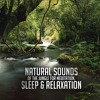 One Hour of Natural Sounds of the Jungle for Meditation, Sleep & Relaxation