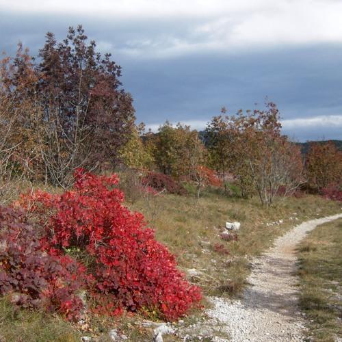 Con Curiosi di natura sul Monte Cocusso (Trieste)