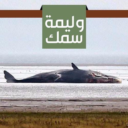 وليمة سمك | الشيخ محمد صالح المنجد