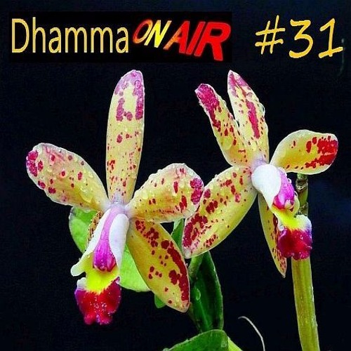 Dhamma on Air #31 Audio: Distraction & Disillusion