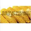 Slob On My Knob Like Corn on the Cob Remix - Cousin Cizz x Jay Astro