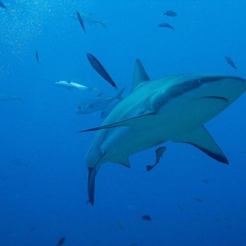 #09 6 Curiosidades Sobre os Bastidores do Shark Tank