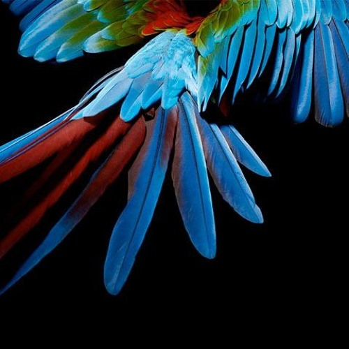The Lost Parrot By Naomi Shihab Nye  Music Christian Lindquist, voice M. JusticeM