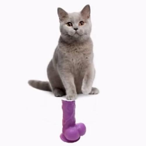 Cat Dildo