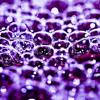 Toxic Bubbles