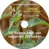 Urtica / Brennessel